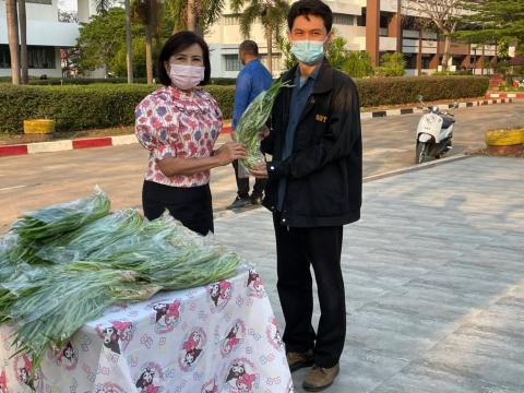 มอบผักบุ้งปลอดสารพิษไว้รับประทานให้กับคณะผู้บริหาร คณะครู ฯลฯ